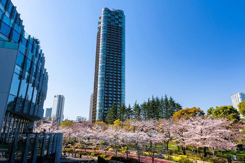 パークコート赤坂檜町ザ・タワーと桜